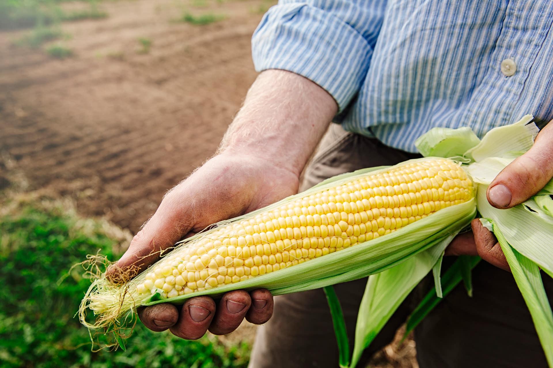 IntiStClair_Agriculture_016
