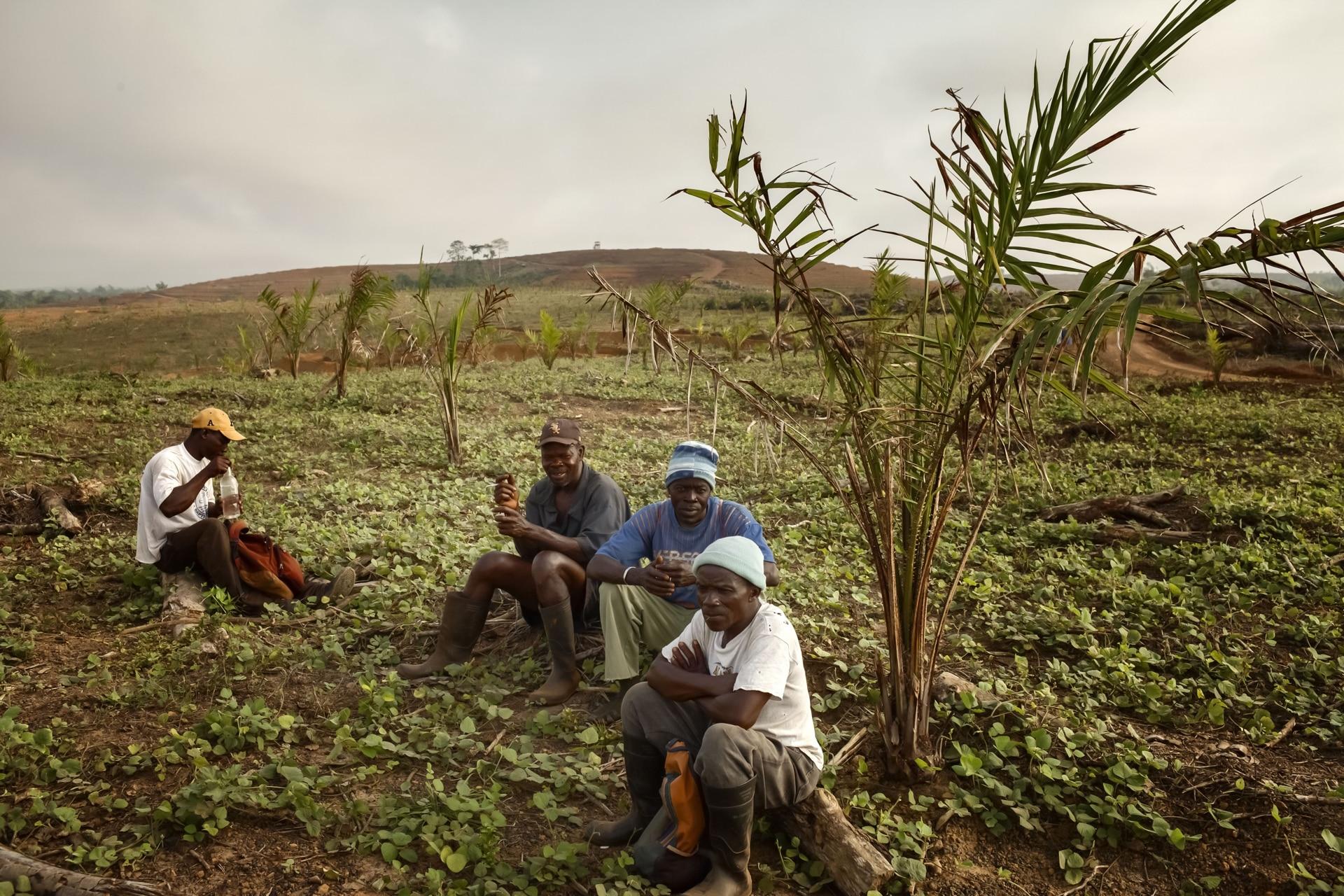 Land Grabbing in Liberia for Onearth Magazine