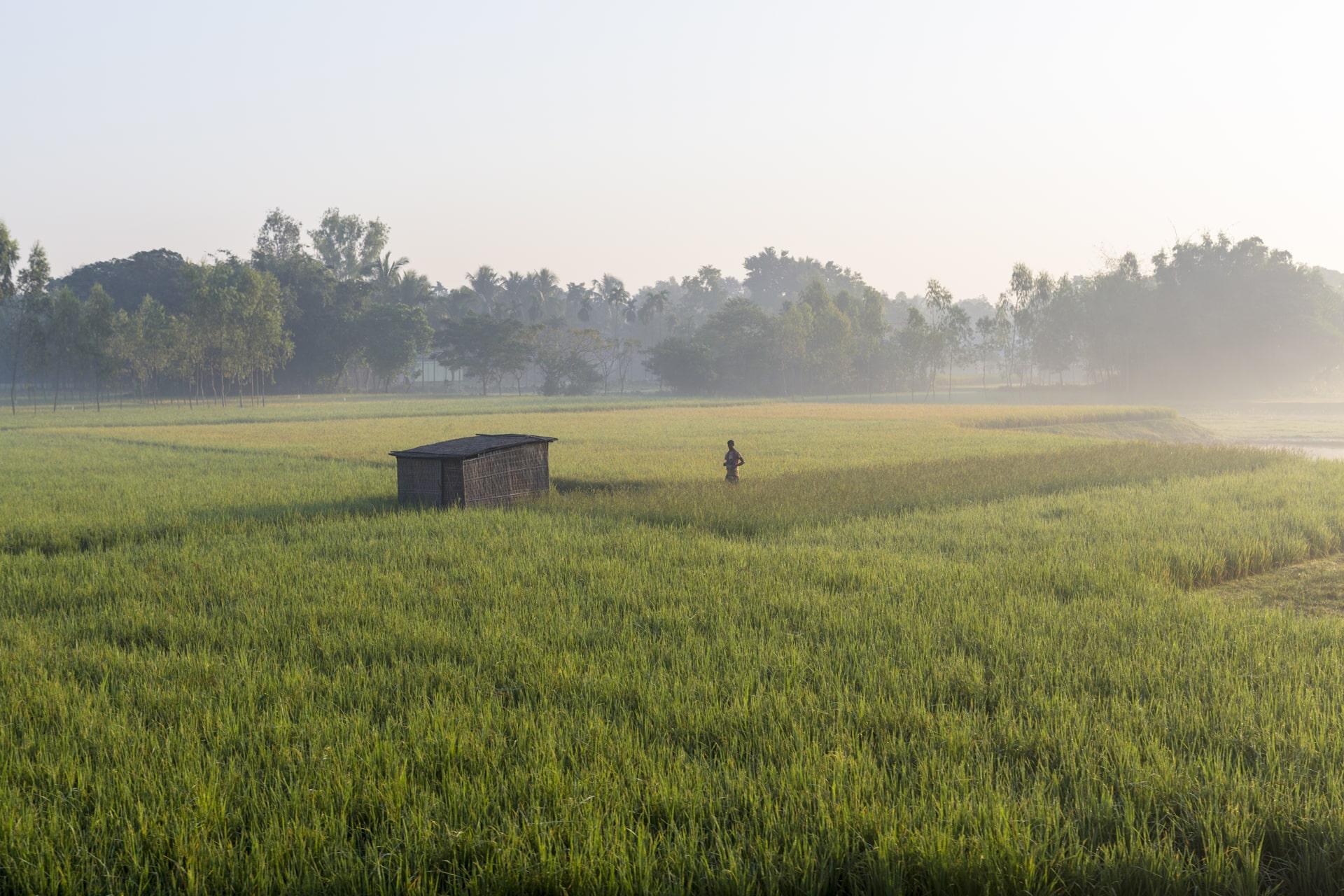 DEWANGONI, BANGLADESH – NOVEMBER 3, 2014