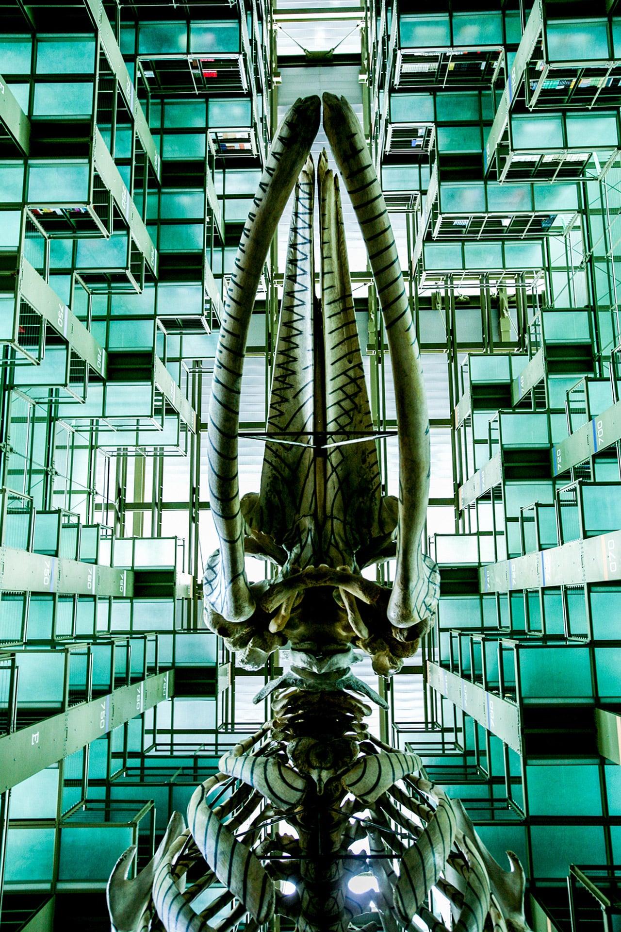 walter_shintani_architecture-08